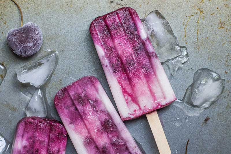 frozen pops made in Jose Mier kitchen